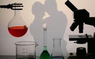 Что такое «любовь» с научной точки зрения