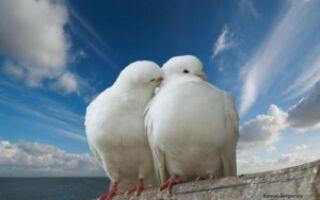 Что такое платоническая любовь