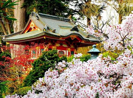 Ханами - красота по-японски: цветение сакуры