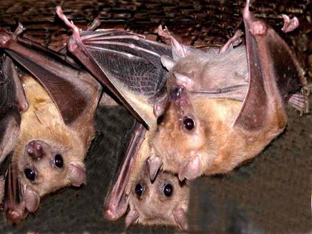 Летучие мыши: дружба в животном мире